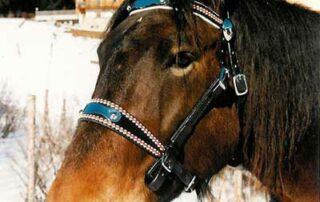 Sattlerei Oberhauser Pferd_Halfter_af italienisch